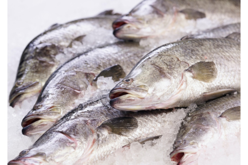 Whole Baby Barramundi (600g)